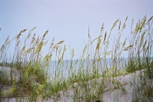 Sand and Seaoats