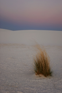 White Sands Sunset with Plant