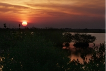 Sunset Over the Mangroves