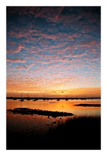 Sunrise, Oyster Beds, and Marsh Grass