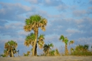 Palm Trees on the Beach at Fernandina